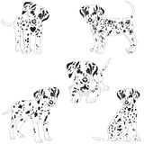 Dalmatians, cute, sad. Vector Illustration Portrait of Dalmatian Puppy. Dog isolated. Royalty Free Stock Photos