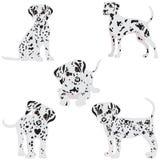 Dalmatians, lindo, tristes Ilustración del vector Retrato del perrito dálmata Perro aislado Fotografía de archivo libre de regalías
