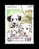 Dalmatians on postage stamp. Cancelled postage stamp printed by Benin, that shows Dalmatians royalty free stock images