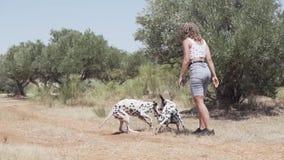 Dalmatinische Hunde, die in den Wald spielen und springen stock footage