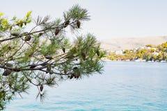 Dalmatinische Küstenlinie, Trogir, Kroatien Stockfoto