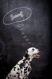 Dalmatinischer Hund, der über einen Knochen träumt Lizenzfreies Stockfoto