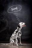 Dalmatinischer Hund, der über einen Knochen träumt Lizenzfreie Stockfotos