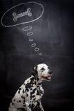Dalmatinischer Hund, der über einen Knochen träumt Stockbild