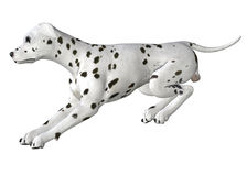 Dalmation - 03 Stock Photography