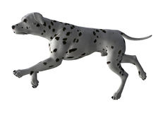 Dalmation - 05 Royalty Free Stock Photo
