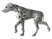 Dalmation - 06 Stock Images