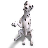 Dalmation illustrazione vettoriale
