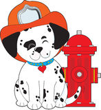 Dalmation Fire Dog Stock Images
