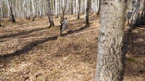 Dalmatyńczyka psi bieg z kawałkiem drewno na polu Dalmatyński pies z kijem, zwolnione tempo zdjęcie wideo