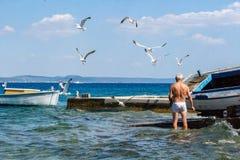 Dalmatyńscy denni scen Seagulls, rybak i obraz royalty free