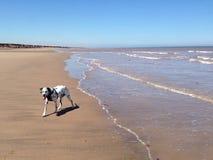 Dalmatyńska cieszy się plaża zdjęcie stock