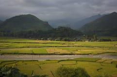 Dalrisfält på skördsäsongen Royaltyfri Bild