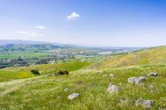 Dalsikt, södra San Jose, San Francisco Bay område, Kalifornien royaltyfri foto