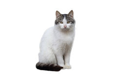 Dalta katten Arkivfoton