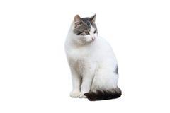 Dalta katten Arkivbilder