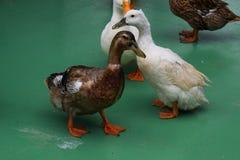 Dalta zoo/den Japan Kanagawa Hiratsuka-staden Royaltyfri Foto