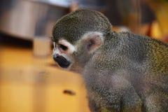 Dalta zoo/den Japan Kanagawa Hiratsuka-staden Royaltyfria Bilder