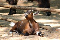 Dalta zoo i dåliga Mergentheim arkivbild