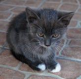 Daltar kattungen Fotografering för Bildbyråer