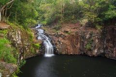 Dalwood cai em NSW do norte, Austrália Fotografia de Stock