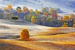 Dam Autumn in Inner Mongolia Royalty Free Stock Image