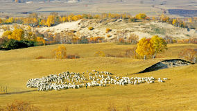 Dam Autumn in Inner Mongolia Royalty Free Stock Images