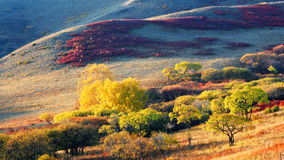 Dam Autumn in Inner Mongolia Stock Photo