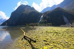 Dam Bowen Falls, Milford Sound, Fiordland nationalpark, Nya Zeeland royaltyfri fotografi