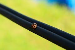 Dam Bug på kabel arkivfoto