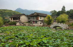 Dam full  plants i in Furong (Hibiscus) ancient village Royalty Free Stock Photography