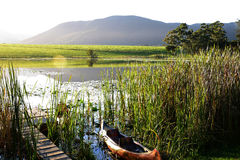 Dam with jetty and canoe in the Garden Route, South Africa Stock Photos