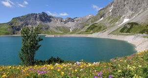 Dam lake lunersee and spring flowers, austira Royalty Free Stock Photos