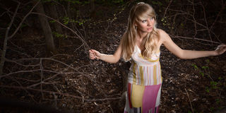 dam lasowi potomstwa Zdjęcie Royalty Free