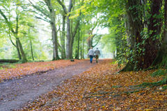 Dam Marys Walk, Crieff, Skottland, UK Arkivbild