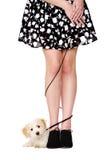 Dam nogi czochrali z szczeniakiem na czarnym prowadzeniu Fotografia Stock