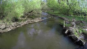 Dam on small river. Tree branch forming small dam of beavers stock video