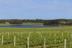 Dam surrounded by green lush vineyards Stock Photography