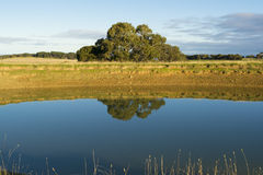 Dam with Tree Reflected in the Water, Fleurieu Peninsula, South. Random farm land dam in the Fleurieu Peninsula, South Australia, reflecting tthe tree and bank Stock Photos