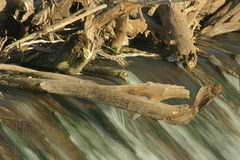 Dam trees. Tree limbs on dam, Holmesville, Nebraska Stock Image