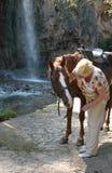 Dama elegancki wiek opowiada koń i muska ona fotografia stock