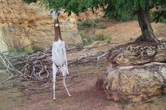Dama gazela Fotografia Royalty Free