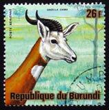 Dama gazelle, addra gazelle, ή mhorr gazelle dama Nanger, μορφή Στοκ Φωτογραφία