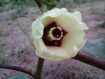 Dama palca kwiaty Obraz Stock
