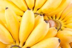Dama Palcowy banan i ręka złoci banany na białego tła Pisang Mas zdrowym Bananowym owocowym jedzeniu odizolowywającym Obrazy Stock