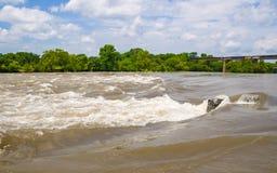 Dama Ptasi jezioro w Austin Zdjęcie Stock