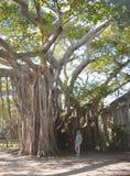 Dama w niebieskiej marynarce i menchiach dyszy kłaść na drzewie fotografia royalty free