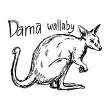 Dama wallaby - vector illustration sketch hand drawn. Dama wallaby - vector illustration sketch hand drawn with black lines, isolated on white background Stock Photo