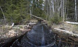Damage after beaver Stock Image