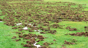 Damage Caused by Feral Hog Rooting Stock Images